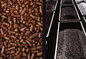 création de biomasse