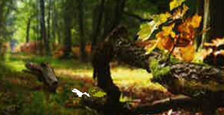 bois écologique